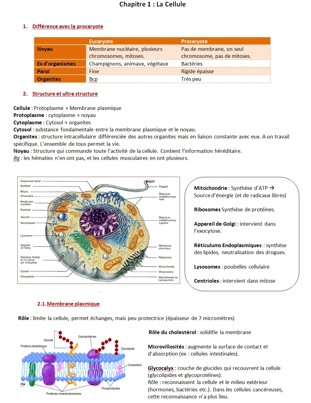 Cellule 2