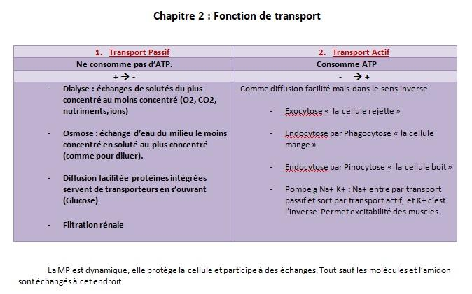 Fonction de transport